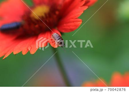 赤い花と虫 70042876