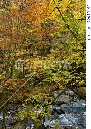 塩原スッカン沢の渓流と素簾の滝に紅葉の森 70056146