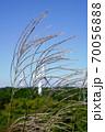 三重県 青山高原 ススキと風車(風力発電、初秋) 70056888