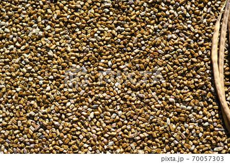 エビスグサの種子と莢 70057303