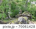 志賀高原夏の丸池の風景 70061428