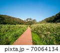 青空の小網代の森の風景 10月 70064134