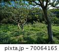秋晴れの小網代の森の風景 70064165