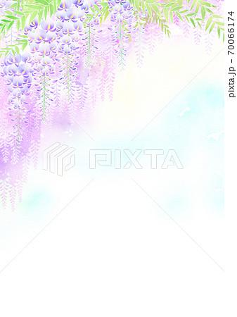 藤の花 70066174
