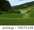 静岡県 大栗安の棚田(日本の棚田百選) 70075148