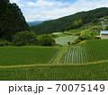静岡県 大栗安の棚田(日本の棚田百選) 70075149