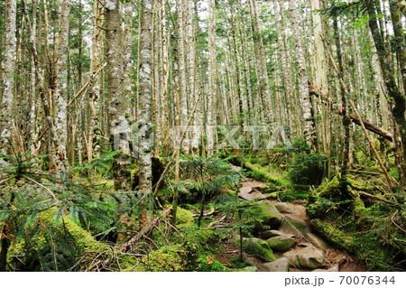 初秋の北八ヶ岳 『にゅう』から中山への縦走路の苔の森 70076344