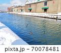 冬の小樽運河と鴨 70078481