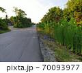 熱帯の郊外、ひび割れと陥没で荒れた舗装道路と周りの雑草、雑木 70093977