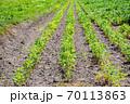 大豆畑 70113863