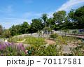 鶴見緑地公園 バラ園風景 70117581