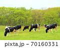 ホルスタイン牛 70160331