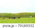 ホルスタイン牛 70160332