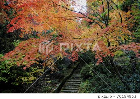 広島県三原三景園の紅葉 石段と落ち紅葉 70194953