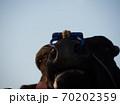 黒毛の牛 70202359