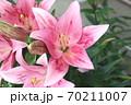 ユリの花 70211007