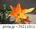 ユリの花 70211011