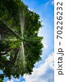 青空の向こうから降りそそぐ太陽光線が、大木の木々に遮られて天使のはしごに見える素敵な写真 70226232