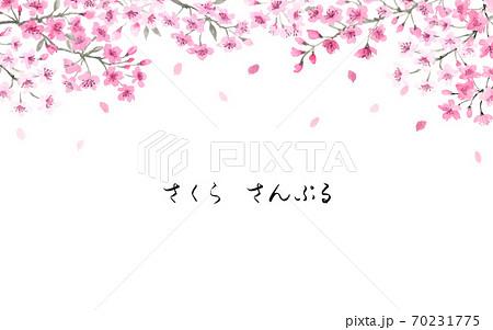 桜の背景 墨彩画 70231775