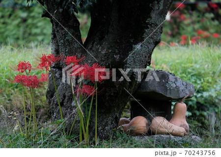 石の祠に咲く彼岸花とバターナッツカボチャのお供え物 70243756