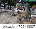 奈良公園の鹿 70246687