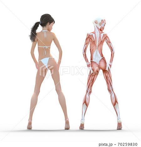 女性 解剖 筋肉 perming3DCG イラスト素材 70259830