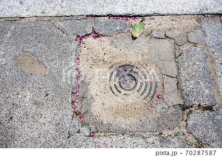 紅梅が満開の菅大臣神社、境内参道の地面に散る梅の花弁 70287587