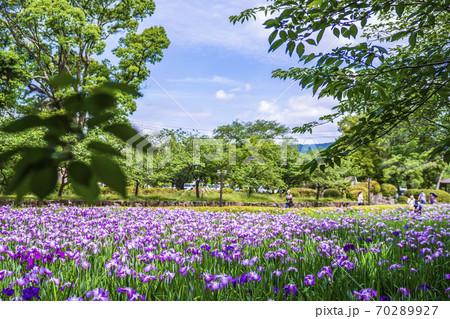 長崎県大村市 大村公園 花菖蒲 70289927