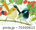 水彩画・小鳥と木の実 70300615