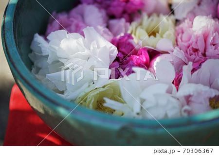 鉢の中に飾られた牡丹 70306367