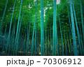 蒼き竹林 70306912