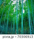 蒼き竹林(正方形バージョン) 70306913