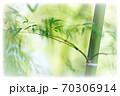 明るい竹林(周囲ぼかし) 70306914
