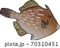 カワハギ 70310451
