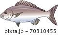 イサキ 70310455