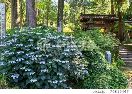 北鎌倉・浄智寺の山門と額あじさい 70319447