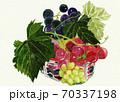 水彩画 葡萄 果物 70337198