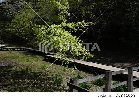 千葉木更津市の濃溝の滝付近にある清水渓流広場の\木道 70341058