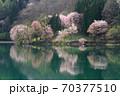 中綱湖 桜咲く春 70377510