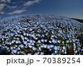 ネモフィラの丘(3) 70389254