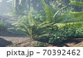 Beautiful jungle and green ferns in the rainforest. View of the green forest in the jungle on a sunny morning. 3D Rendering. 70392462