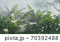 Beautiful jungle and green ferns in the rainforest. View of the green forest in the jungle on a sunny morning. 3D Rendering. 70392488