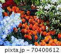 イタリアのとあるお花屋さん チューリップ 70400612