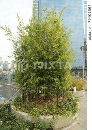 植物 7017 ソウル市 70401662