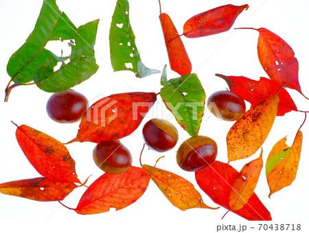秋の味覚 70438718
