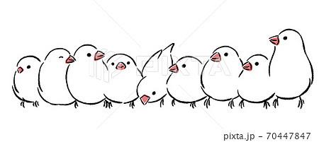 文鳥がいっぱい 70447847