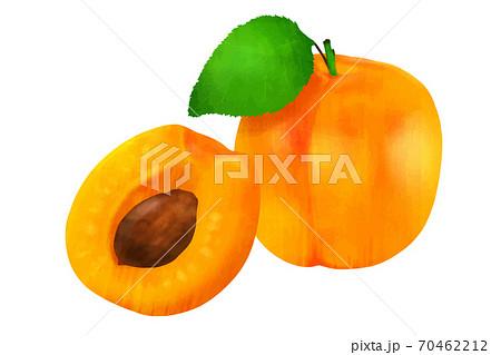 杏子 アプリコット 70462212