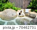 温泉イメージ 露天風呂イメージ 温泉 露天風呂 温泉旅館 日本の風景 日本文化  70462731