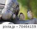 鬼瓦を見てる雀のつがい 70464159