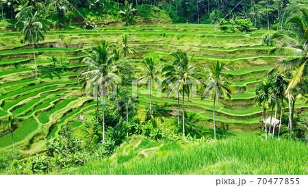 バリ島のテガラランの風景 70477855